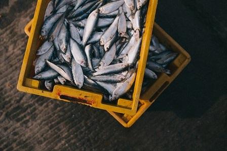 🥇 Procesador de mariscos en Cánada   $36,000 mensuales